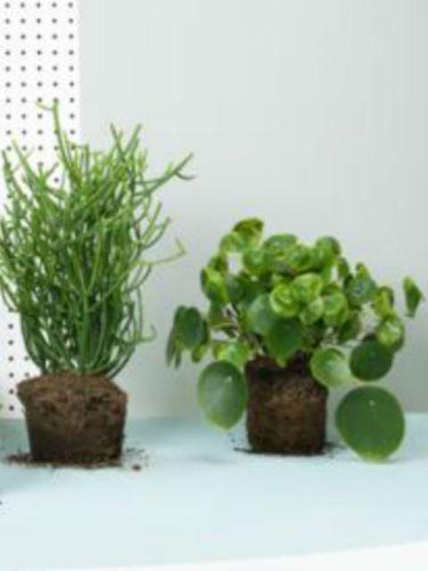 Yes!-Door-Sprinklr-vergaan-je-planten-nooit-meer