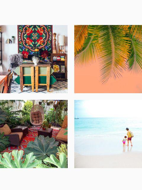 Tropics, Collage, Shore, Holiday, Beach, Caribbean, Lamp, Arecales, Creative arts, Houseplant,