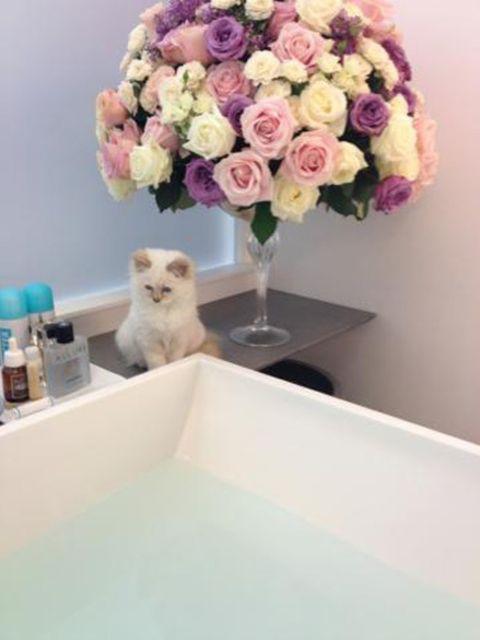 Fluid, Petal, Flower, Bouquet, Pink, Room, Carnivore, Cut flowers, Interior design, Flowering plant,