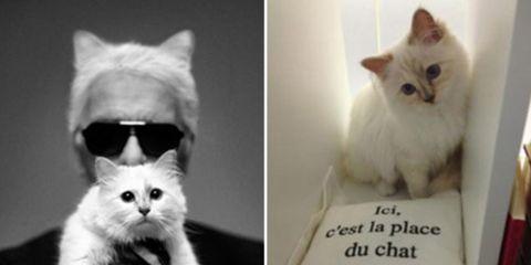 80-jaar-Karl-Lagerfeld-Karl-Choupette