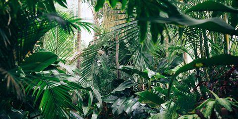 Vegetation, Jungle, Terrestrial plant, Natural environment, Leaf, Plant, Tree, Botany, Rainforest, Palm tree,