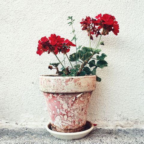 Flower, Petal, Flowerpot, Flowering plant, Still life photography, Vase, Plant stem, Annual plant, Floral design, Still life,
