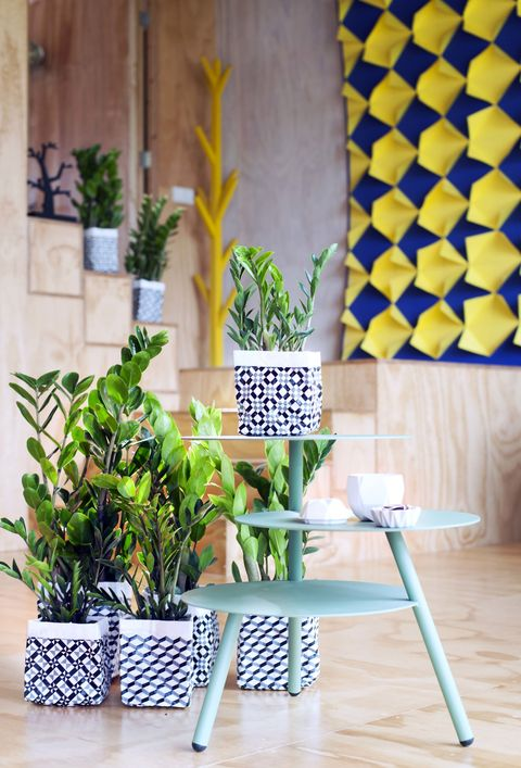 Flowerpot, Interior design, Hardwood, Houseplant, Laminate flooring, Vase, Annual plant, Plant stem, Wood flooring, Herb,