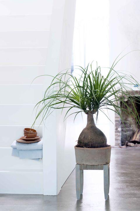 Flowerpot, Vase, Artifact, Houseplant, Still life photography, Pottery, Plant stem,