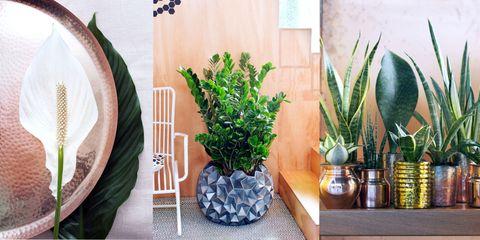Bekend Deze 9 planten zijn niet kapot te krijgen. #YK85