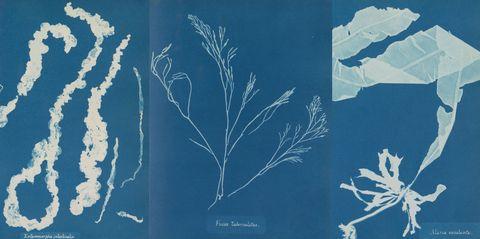 Blue, Botany, Pattern, Design, Organism, Branch, Plant, World, Illustration, Art,