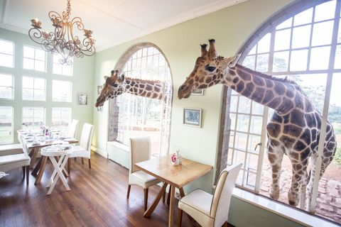 De mooiste safari-experience die je ooit zult meemaken