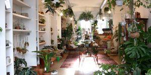 Dit zijn de leukste plantenwinkels van Nederland