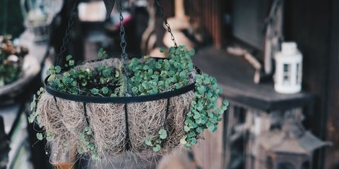 Green, Tree, Plant,