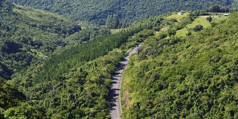Vegetation, Nature, Plant community, Landscape, Natural landscape, Nature reserve, Forest, Ecoregion, Plantation, Terrestrial plant,