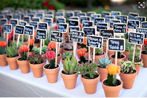 Flower, Flowerpot, Plant, Botany, Houseplant, Soil, Garden, Tulip, Local food, Herb,
