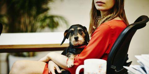 Dog, Canidae, Companion dog, Dog breed, Table, Carnivore, Puppy, Sitting, Fawn, Black hair,