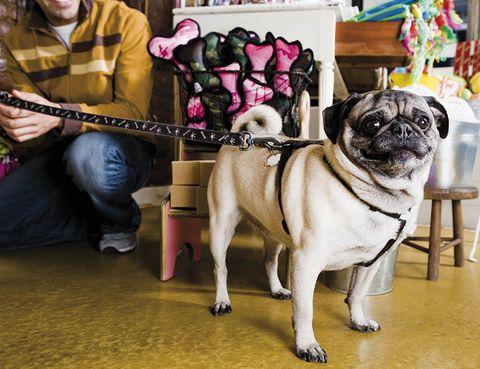 Plan De Negocio Para Montar Una Tienda De Mascotas