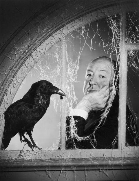 Bird, Crow, Raven, Beak, Organ, Monochrome, Crow-like bird, raven, Monochrome photography, New caledonian crow,
