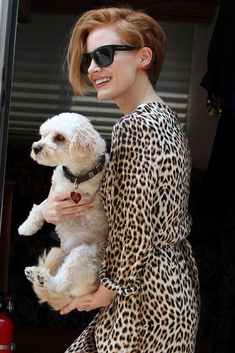 Eyewear, Glasses, Dog, Dog breed, Carnivore, Sunglasses, Toy dog, Street fashion, Companion dog, Maltepoo,