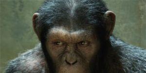 Organism, Lip, Cheek, Natural environment, Skin, Primate, Forehead, Vertebrate, Shoulder, Terrestrial animal,