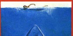 Shark, Lamniformes, Vertebrate, Lamnidae, Cartilaginous fish, Great white shark, Jaw, Requiem shark, Organ, Tooth,