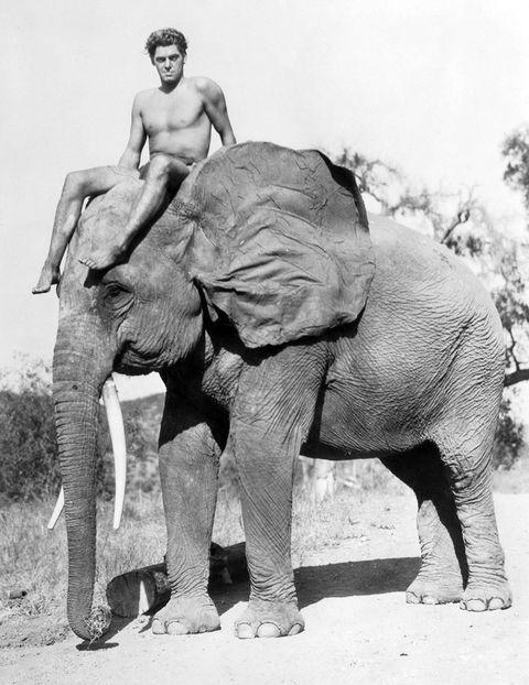 Elephant, Elephants and Mammoths, Organism, Skin, Indian elephant, Vertebrate, Photograph, Standing, Terrestrial animal, Working animal,