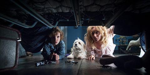 Dog, Darkness, Carnivore, Dog breed, Flash photography, Companion dog, Blond, Toy dog, Canidae, Fur,