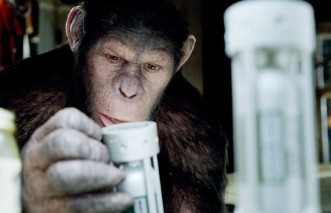 Skin, Human, Primate, Hand, Bottle, Common chimpanzee,