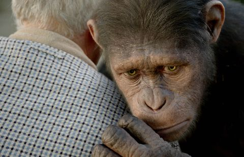 Mammal, Skin, Wrinkle, Primate, Snout, Forehead, Common chimpanzee, Human, Close-up, Organism,
