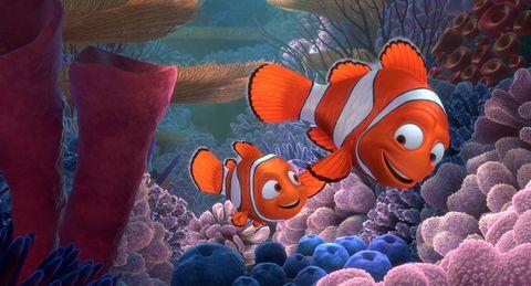 anemone fish, Organism, Natural environment, Vertebrate, clownfish, Underwater, Fish, Colorfulness, Marine biology, Coral,
