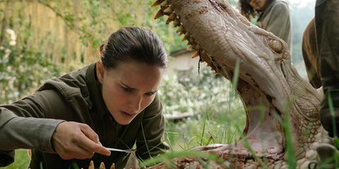 Adaptation, Tree, Plant, Terrestrial plant, Wildlife,