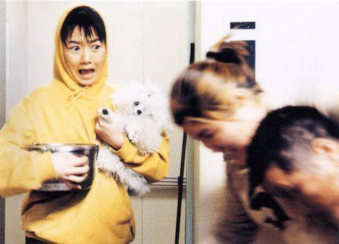Snapshot, Yellow, Child, Cat,