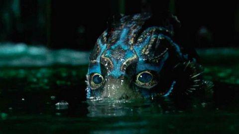 Water, Organism, Adaptation, Wildlife, Darkness,