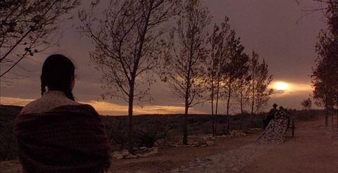 Nature, Branch, Sky, Atmosphere, Photograph, Landscape, Atmospheric phenomenon, Soil, Sunlight, Sunrise,