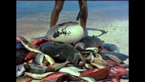 Crab, Organism, Fish,
