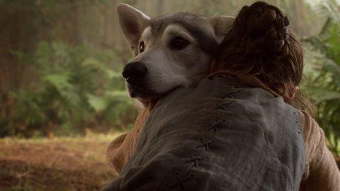 Brown, Dog breed, Dog, Carnivore, Terrestrial animal, Sunlight, Liver, Sled dog, Snout, Fur,