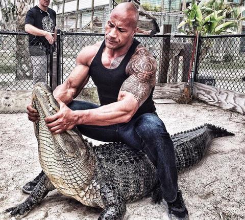 Alligator, Saltwater crocodile, Crocodilia, Reptile, Crocodile, American alligator,