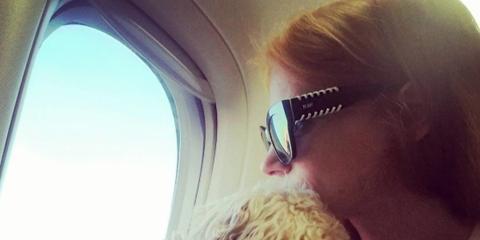 Dog, Mammal, Carnivore, Sunglasses, Air travel, Dog breed, Companion dog, Goggles, Canidae, Daylighting,