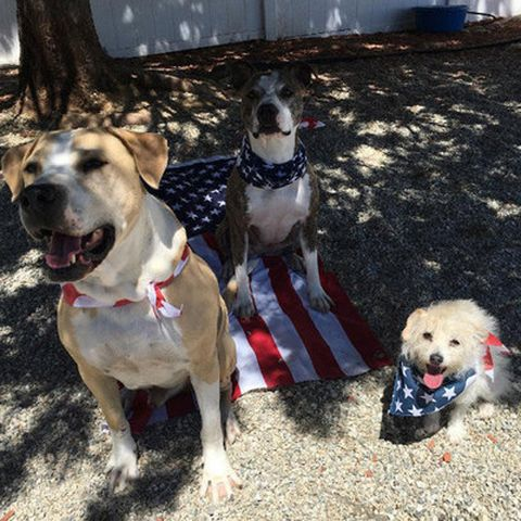 Dog breed, Dog, Carnivore, Collar, Dog supply, Mammal, Pet supply, Sporting Group, Snout, Dog collar,