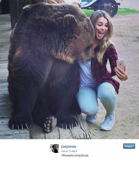 Brown bear, Grizzly bear, Kodiak bear, Bear, Interaction, Carnivore, American black bear, Snout, Fur, Snapshot,