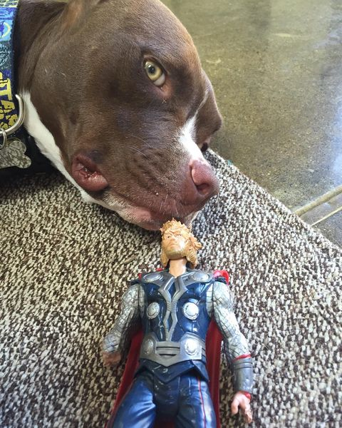 Toy, Dog breed, Dog, Carnivore, Action figure, Whiskers, Fictional character, Snout, Superhero, Liver,