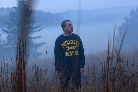 Atmospheric phenomenon, Grass family, Wilderness, Mist, Haze, Fog, Beard, Conifer, Northern hardwood forest, Spruce-fir forest,