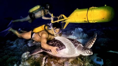 green sea turtle, sea turtle, underwater diving, underwater, snorkeling, turtle, recreation, fish, marine biology, fish,