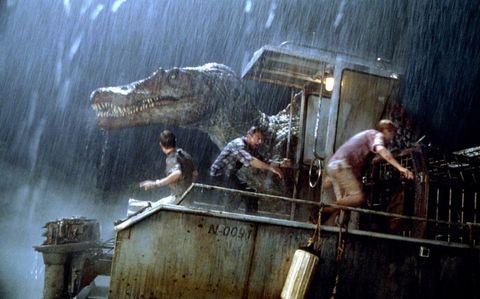 Vertebrate, Crocodile, Crocodilia, Flesh,