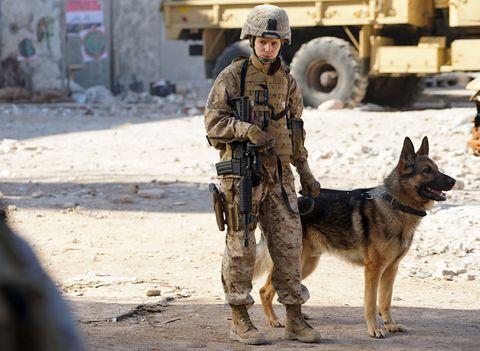 Mammal, Dog, Canidae, Police dog, Kunming wolfdog, Military, Carnivore, Army, Soldier, Dog breed,