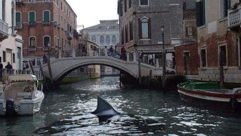 Tiburones películas - sharkploitation cine