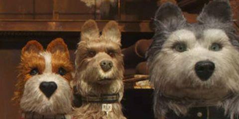Dog, Mammal, Vertebrate, Dog breed, Canidae, West highland white terrier, Carnivore, Cairn terrier, Terrier, Norwich terrier,