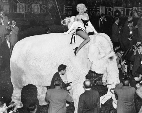 Human, People, Mammal, Performing arts, Interaction, Temple, Performance, Indian elephant, Bovine, Working animal,