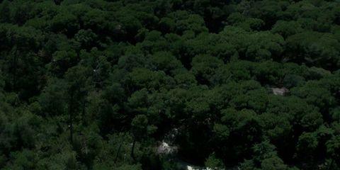 Vegetation, Nature, Natural environment, Green, Leaf, Plant community, Nature reserve, Woody plant, Forest, Ecoregion,