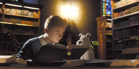 Lighting, Shelf, Stuffed toy, Shelving, Toy, Bookcase, Computer, Personal computer, Student, Livestock,