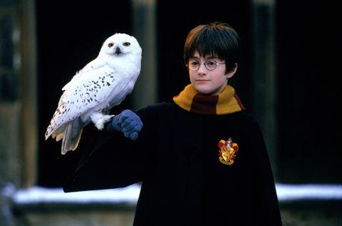Bird, Vertebrate, Owl, Beak, Snowy owl, Adaptation, Bird of prey, Wing, Iris, Violet,