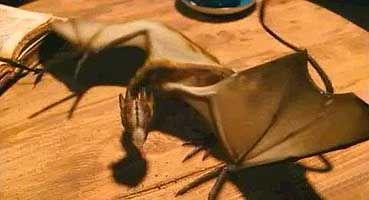 Brown, Black, Tan, Hardwood, Input device, Wood flooring, Laminate flooring, Plastic, Peripheral,