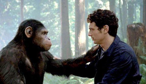 Lip, Organism, Skin, Shoulder, Primate, Adaptation, Terrestrial animal, Interaction, Nature reserve, Temple,