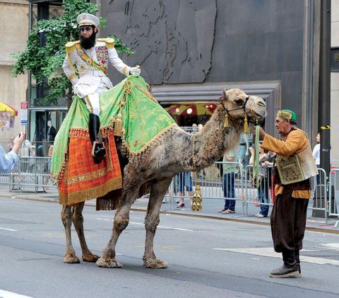 Footwear, Human, Camel, Vertebrate, Camelid, Interaction, Working animal, Street, Temple, Arabian camel,